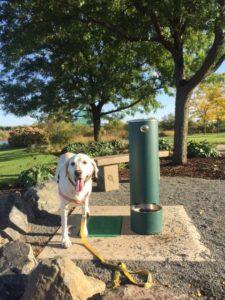 dog-watering